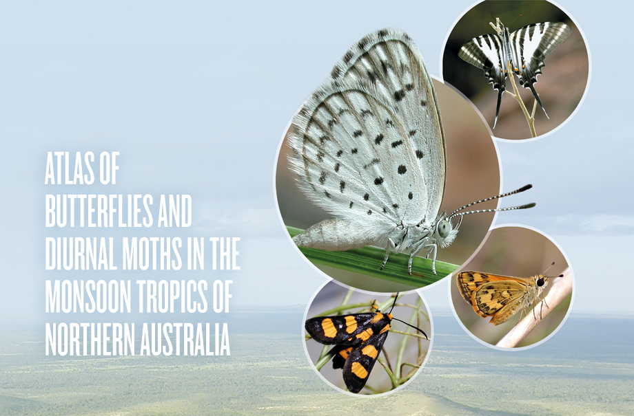 Book Launch: Atlas of Butterflies and Diurnal Moths in the Monsoon Tropics of Northern Australia